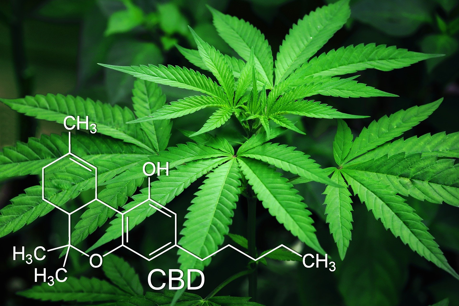 cannabis etechno
